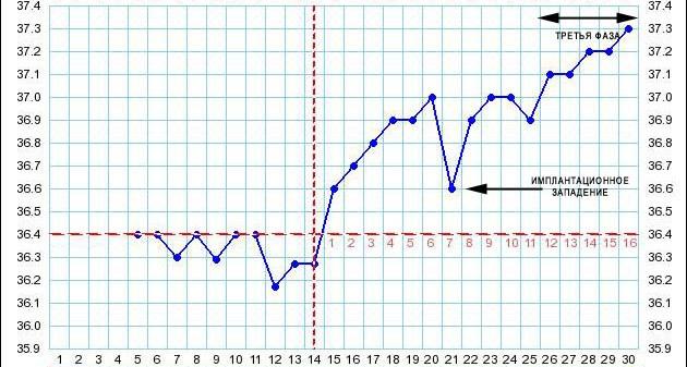 беременности температура базальная признаком ли является