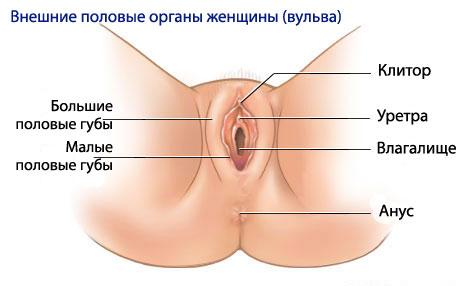Женский оргазм, часть 3 – основные фазы|Рассказывает ...