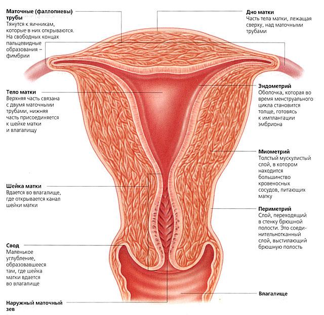 Эндометриоз и беременность.