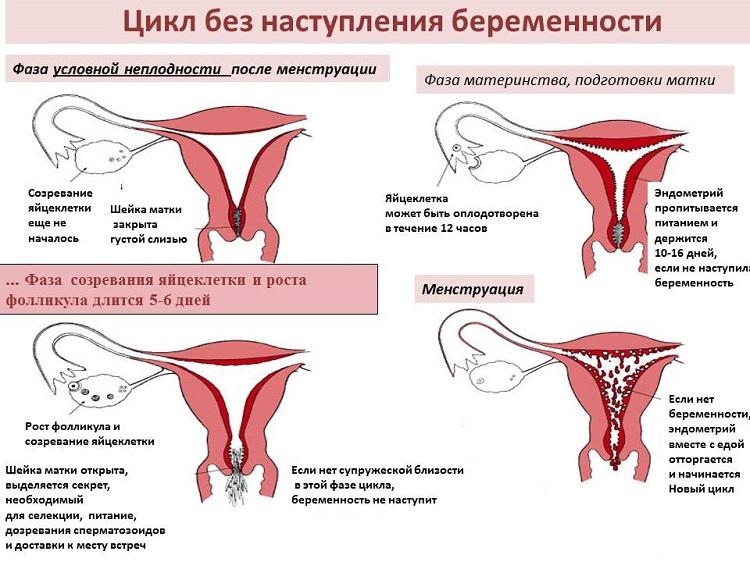 Могут пройти месячные и беременность
