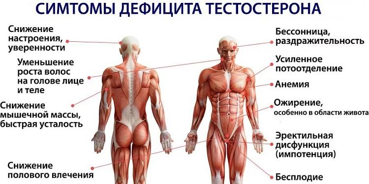 Гнатюк как тестостерон влияет на рост мышц прием УЛЬТРАДЕНТ