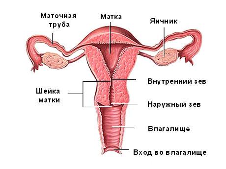Жен интим орган показать фото разные фото 431-500